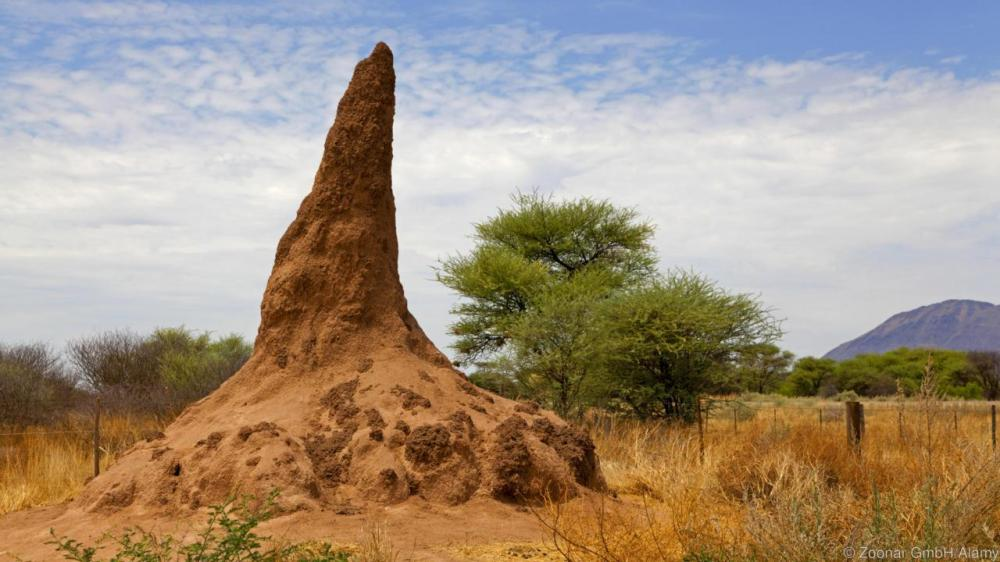 termite Mound. Image shot 03/2013. Exact date unknown.